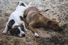 Two dogs sleeping. Close background Stock Image