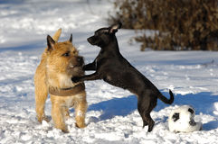Two dogs in snow Stock Image