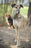 Two dogs standing. Dogs standing on the ground royalty free stock photography