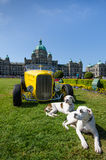 Two dogs steal the show during Northwest Deuce Days. Two dogs bask in the sun in front of a vintage car parked on the lawn of the parliament buildings of the Royalty Free Stock Image