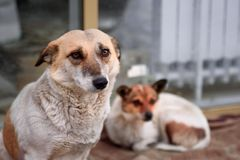 Two dogs on the street royalty free stock image