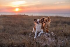 Two dogs at sunset Royalty Free Stock Photography