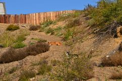 Two dogs take a nap. This picture shows two dogs that doze on the slope stock photography