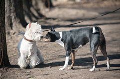 Two dogs talk. On a walk Stock Photo