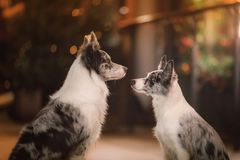 Two dogs together in the city in evening. love and friendship royalty free stock images