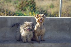 Two dogs sitting in the park royalty free stock photos