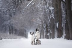 Two dogs together, friendship on nature in winter royalty free stock image