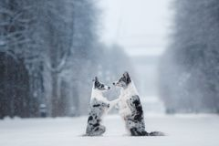 Two dogs together, friendship on nature in winter royalty free stock photography
