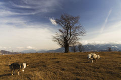 Two dogs on top of a hill Stock Images