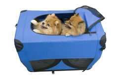Two dogs in travel case Royalty Free Stock Photos