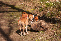 Two dogs with tree stump Royalty Free Stock Image