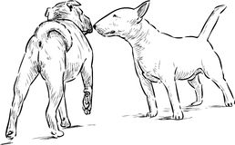 Two dogs. Vector sketch of the dogs on a walk stock illustration