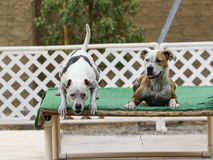 Two dogs waiting on the dock Stock Image