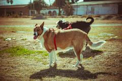 Two dogs walking in park. Two dogs moored walking in the park on a sunny day royalty free stock images