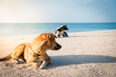 Two dogs watching something Stock Image