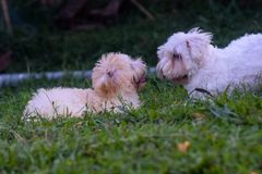 Two dogs which play in the grass. U=in the garden Stock Photography