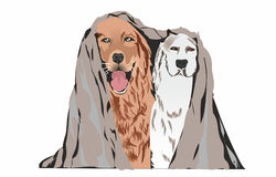 Two dogs on a white background Royalty Free Stock Photo