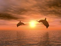 Two dolphin. S floating at ocean (realistic red sunset vector illustration