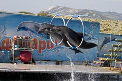 Two dolphin's jumping. Show in the Utrish dolphinarium near Anapa, south Russia Royalty Free Stock Image