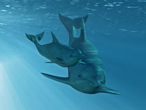 Two Dolphins. Image of two dolphins swimming together underwater Royalty Free Stock Images