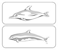 Two dolphins. On grey with white background stock illustration