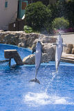Two dolphins. Two happy dolphins in a seaworld Royalty Free Stock Images