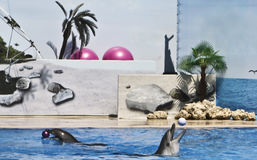 Two dolphins with balls Royalty Free Stock Image