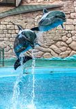 Two dolphins jumping from the pool in the park.  royalty free stock photography