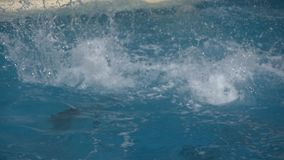 Two dolphins jumping. Slow motion of jumping of two dolphins stock video