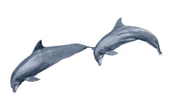 Two dolphins jumping Stock Images