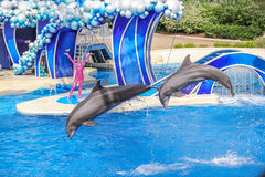 Two dolphins jumps Royalty Free Stock Images