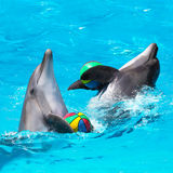 Two dolphins playing in the blue water with balls. Dolphins playing in the blue water with balls Stock Image