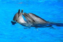 Two dolphins Royalty Free Stock Photography