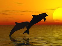 Two dolphins swimming Stock Image