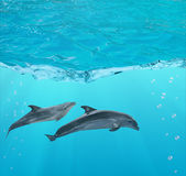 Two dolphins under blue water Royalty Free Stock Image