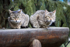 Two domestic cats basking in the sun Royalty Free Stock Photo