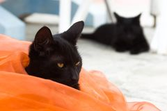 Two black cats. Two domestic cats having a rest, in the yard of the catfish in orange fabric royalty free stock image