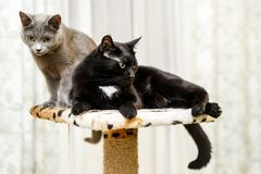 Two domestic cats. Black and Gray Stock Photos