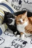 Two domestic cats lying on the couch and hugging. royalty free stock photo