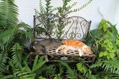 Two domestic cats sleeping on benche. Pair of male tabbies sleeping together side by side on in the garden royalty free stock images