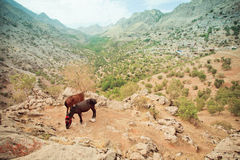 Two donkey grazing on the slopes of mountain Royalty Free Stock Images