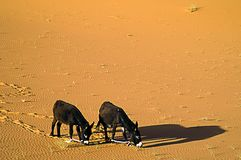 Two donkeys Royalty Free Stock Images