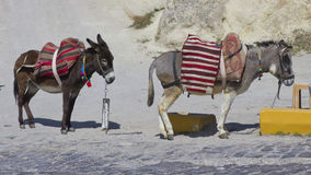 Two donkeys. Parked in a row in a road in Turkey Royalty Free Stock Photo
