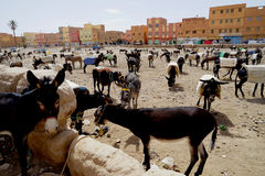 The donkeys parking in the souk of the city of Rissani in Morocco stock image