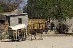 two donkeys pulling a carriage Royalty Free Stock Images