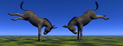 Two donkeys Stock Image