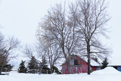 Two door shed behind two tall trees. Red barn behind two tall bare trees in winter Stock Image
