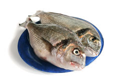 Two dorada fishes. On the plate royalty free stock photos