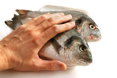 Two dorada fishes with human hand. On them Stock Image