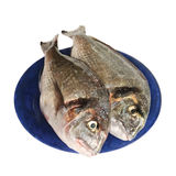 Two dorada fishes (isolated). Two dorada fishes on the plate Royalty Free Stock Image